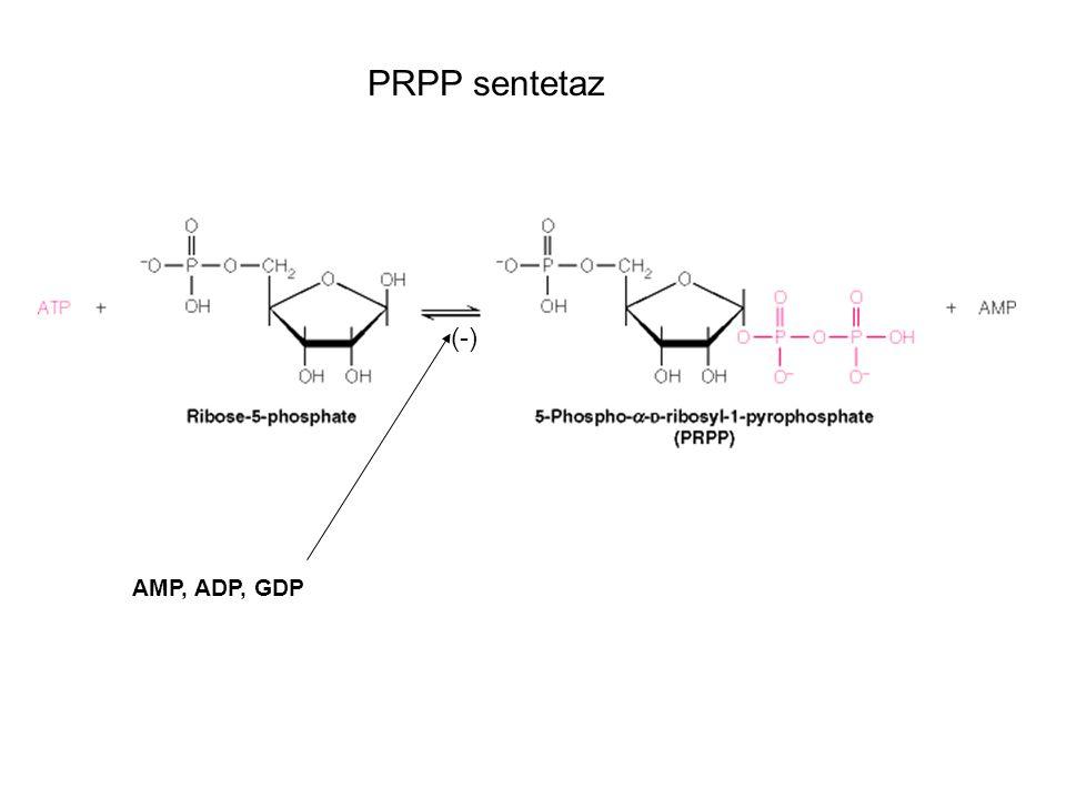 PRPP sentetaz (-) AMP, ADP, GDP
