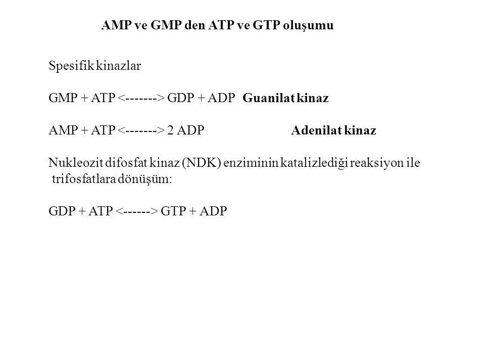 AMP ve GMP den ATP ve GTP oluşumu