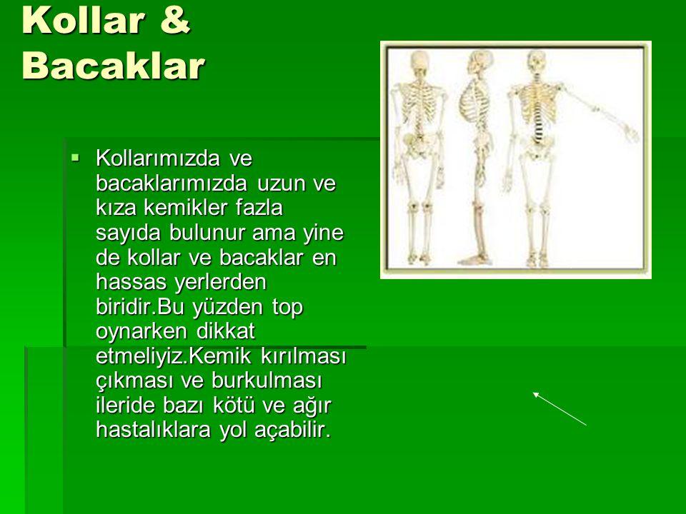 Kollar & Bacaklar