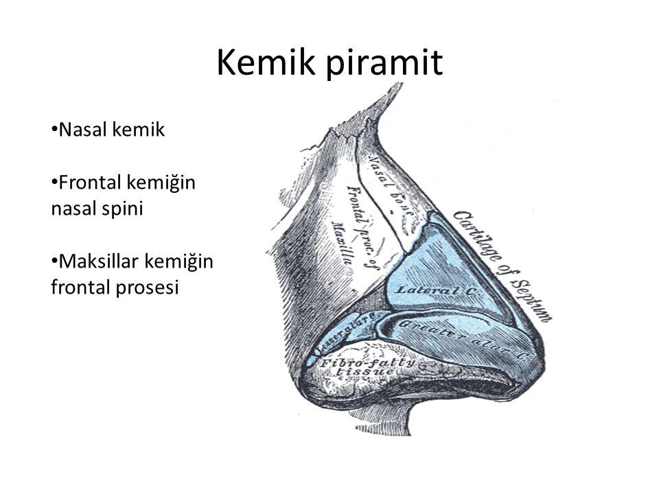 Kemik piramit Nasal kemik Frontal kemiğin nasal spini