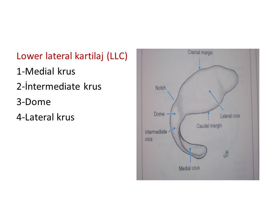Lower lateral kartilaj (LLC)