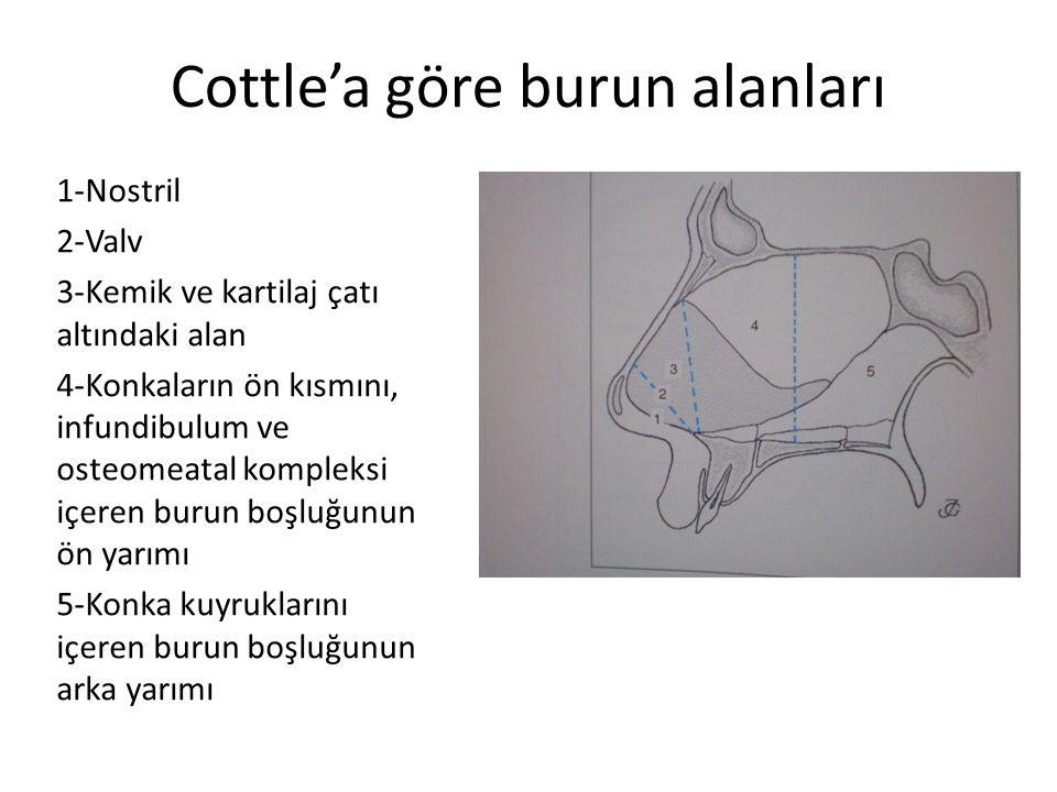Cottle'a göre burun alanları