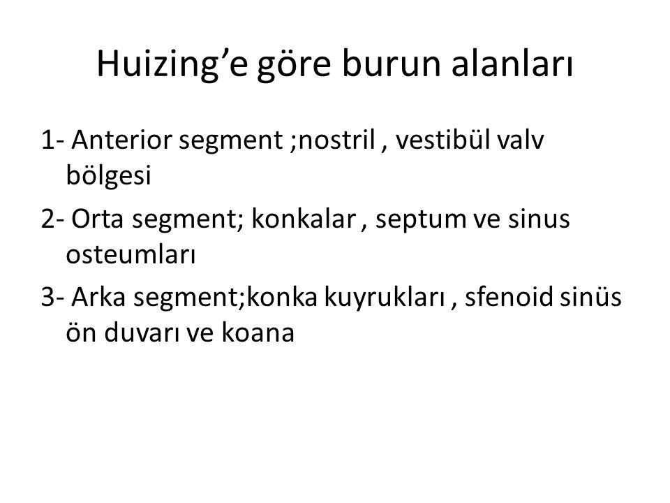 Huizing'e göre burun alanları