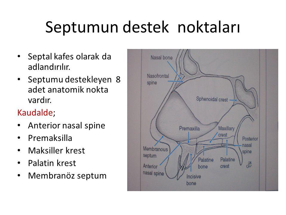 Septumun destek noktaları