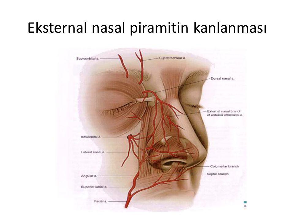 Eksternal nasal piramitin kanlanması