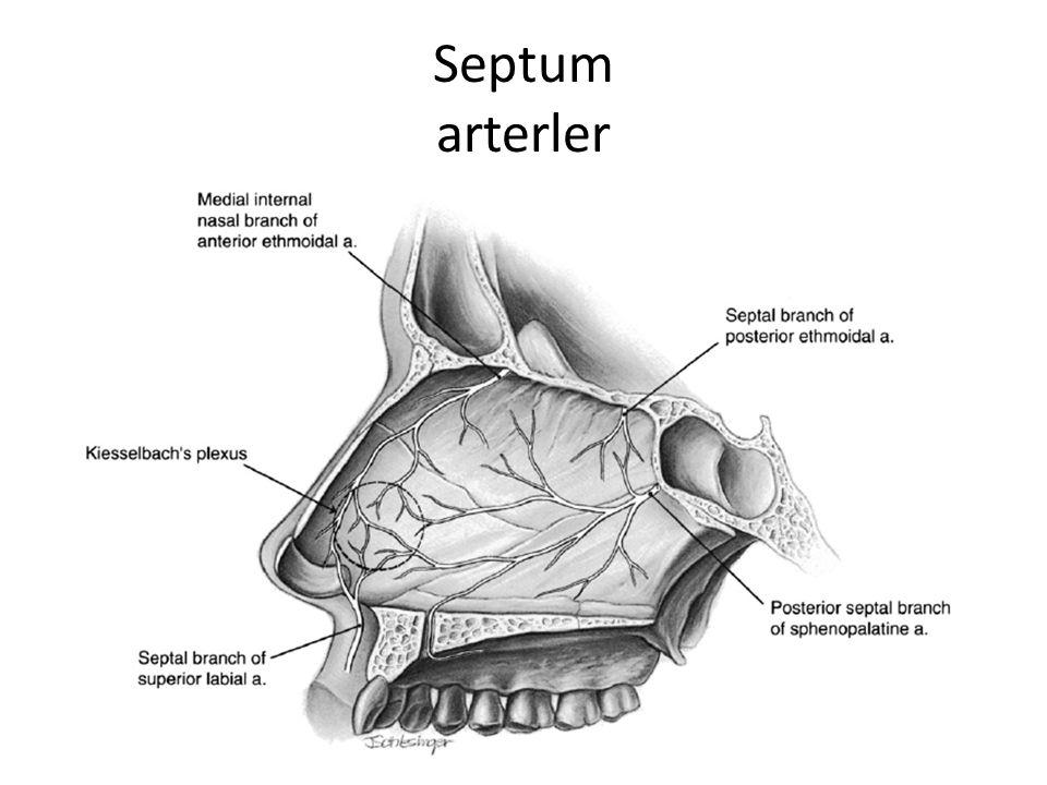 Septum arterler