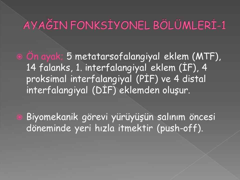 AYAĞIN FONKSİYONEL BÖLÜMLERİ-1