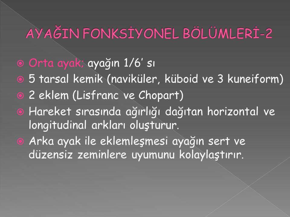 AYAĞIN FONKSİYONEL BÖLÜMLERİ-2