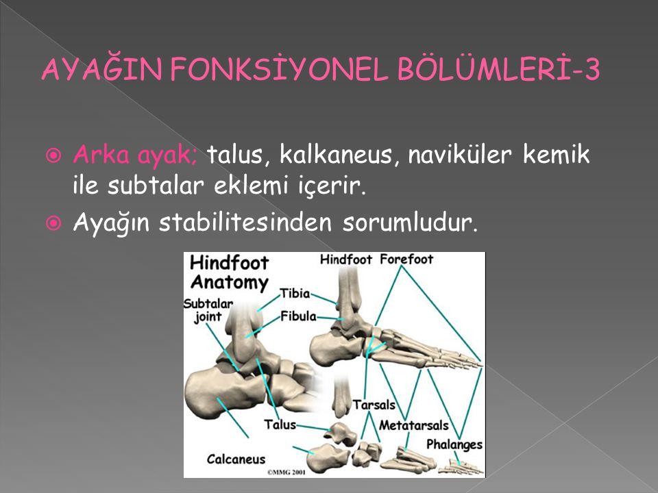 AYAĞIN FONKSİYONEL BÖLÜMLERİ-3