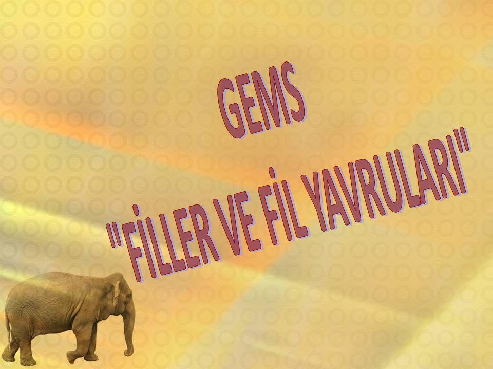 FİLLER VE FİL YAVRULARI