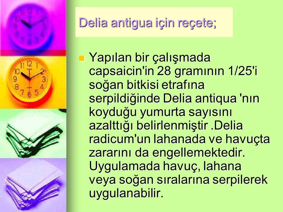 Delia antigua için reçete;