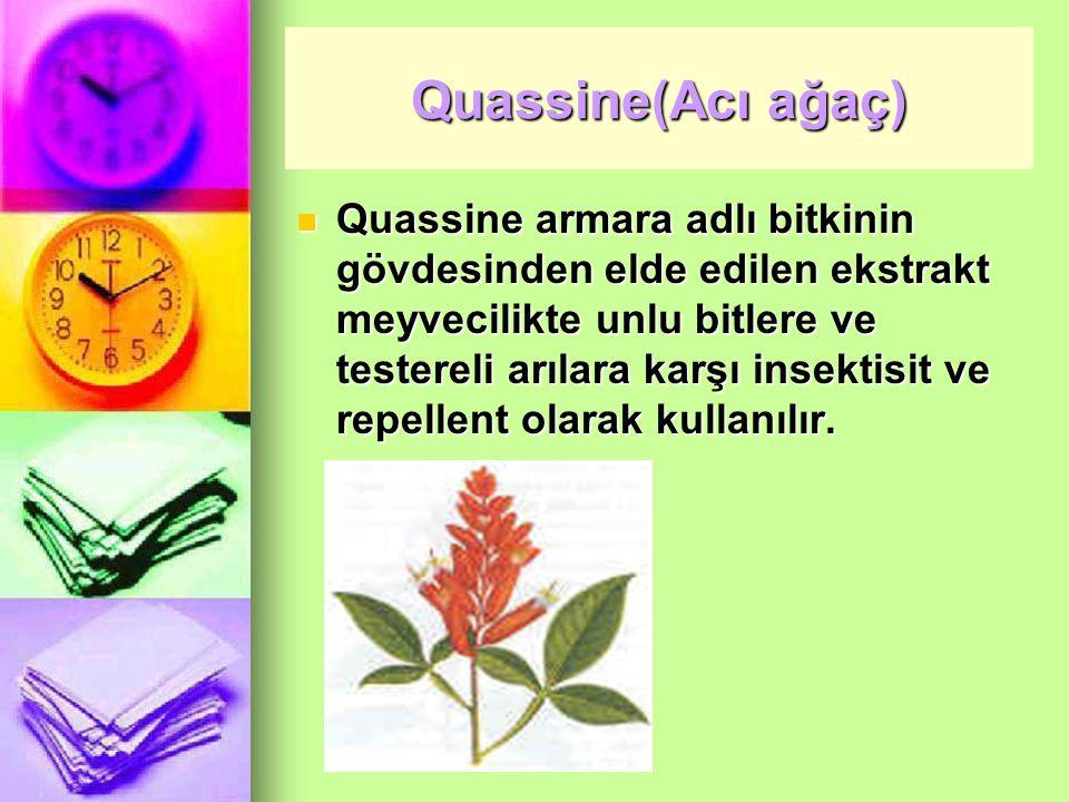 Quassine(Acı ağaç)
