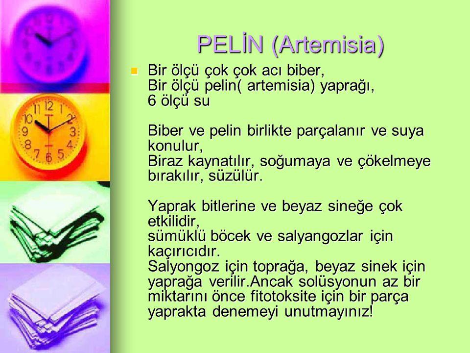 PELİN (Artemisia)