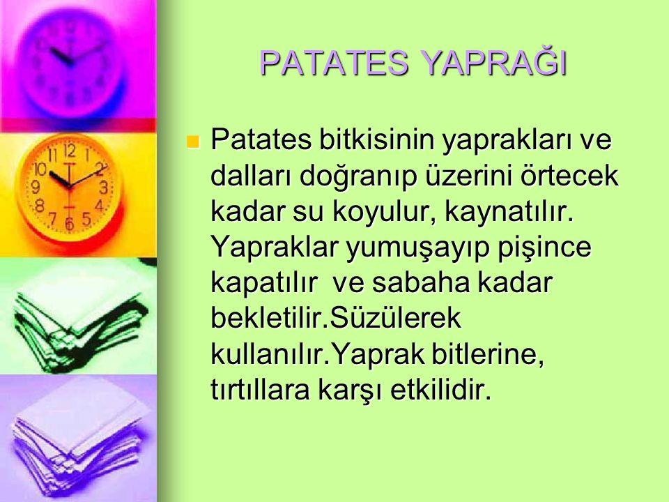 PATATES YAPRAĞI