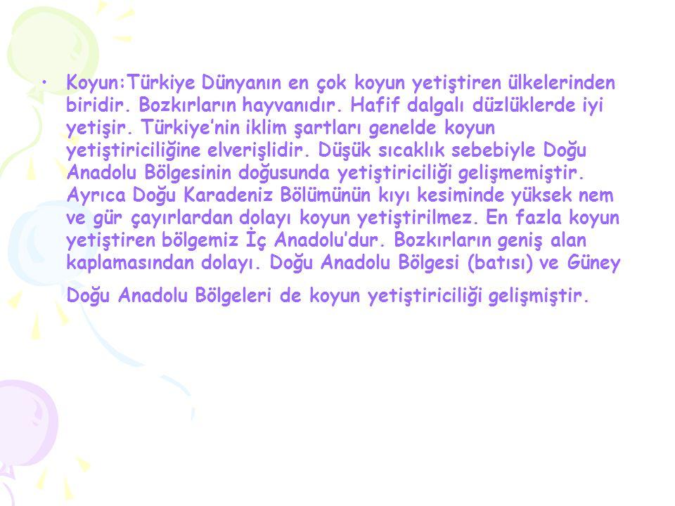 Koyun:Türkiye Dünyanın en çok koyun yetiştiren ülkelerinden biridir
