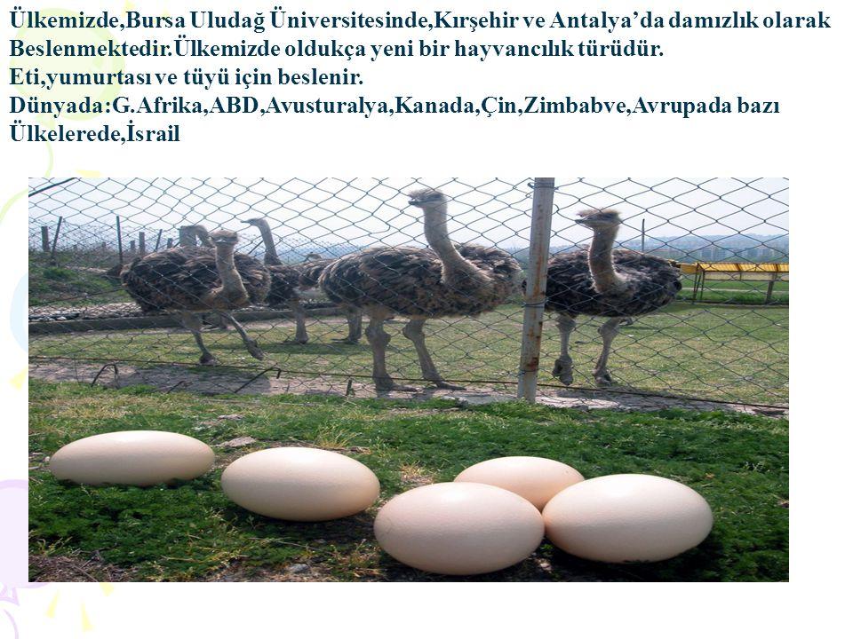 Ülkemizde,Bursa Uludağ Üniversitesinde,Kırşehir ve Antalya'da damızlık olarak