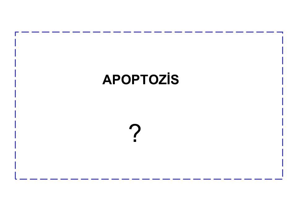 APOPTOZİS