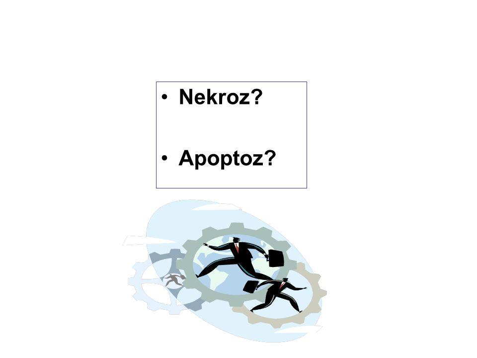 Nekroz Apoptoz