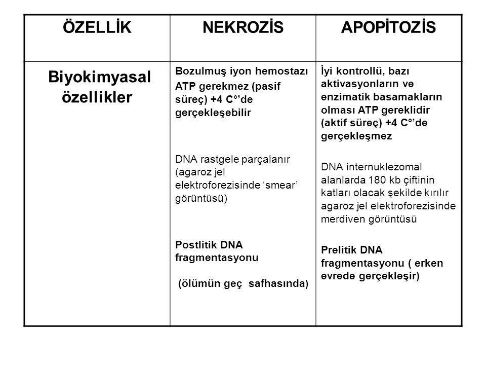 Biyokimyasal özellikler