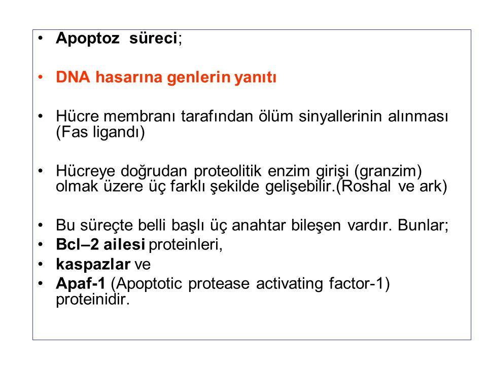 Apoptoz süreci; DNA hasarına genlerin yanıtı. Hücre membranı tarafından ölüm sinyallerinin alınması (Fas ligandı)