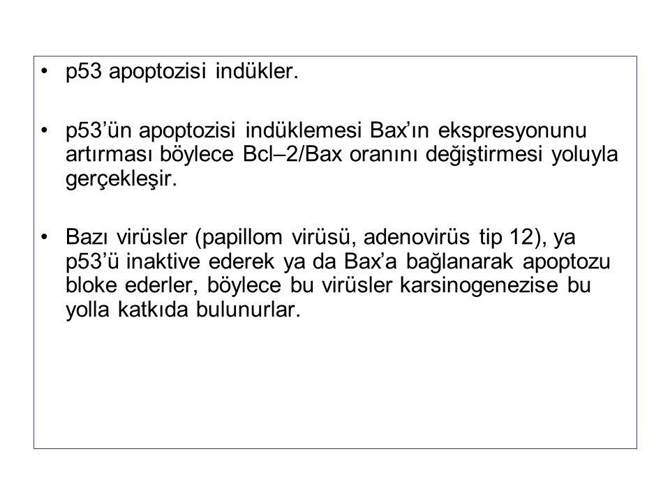 p53 apoptozisi indükler. p53'ün apoptozisi indüklemesi Bax'ın ekspresyonunu artırması böylece Bcl–2/Bax oranını değiştirmesi yoluyla gerçekleşir.