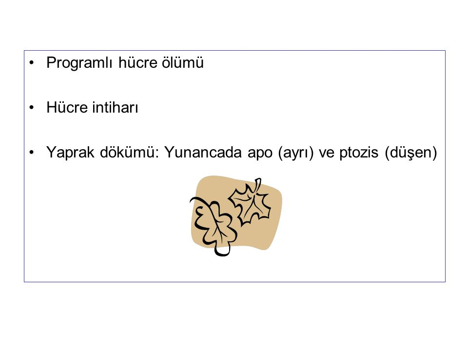 Programlı hücre ölümü Hücre intiharı Yaprak dökümü: Yunancada apo (ayrı) ve ptozis (düşen)