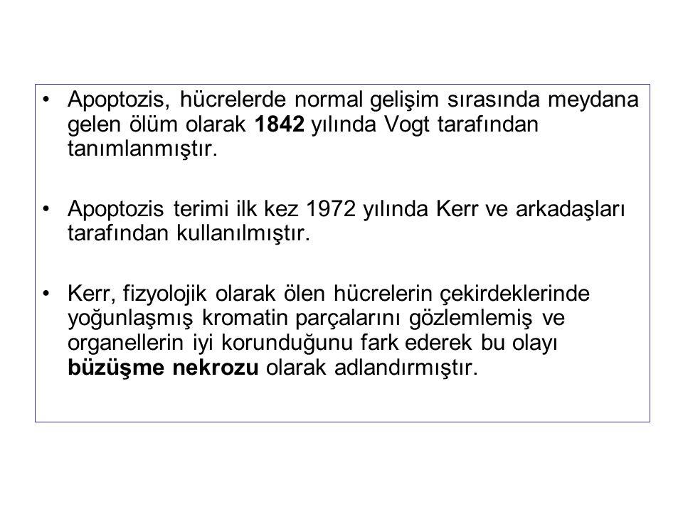 Apoptozis, hücrelerde normal gelişim sırasında meydana gelen ölüm olarak 1842 yılında Vogt tarafından tanımlanmıştır.
