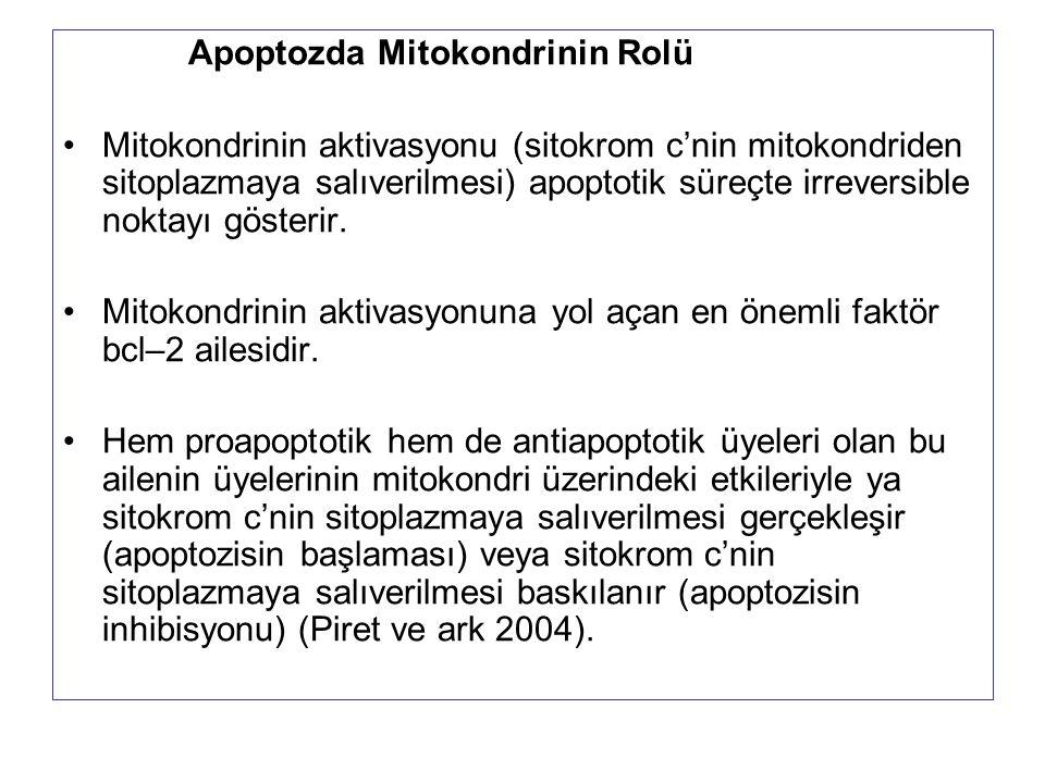 Apoptozda Mitokondrinin Rolü