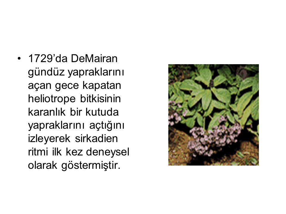 1729'da DeMairan gündüz yapraklarını açan gece kapatan heliotrope bitkisinin karanlık bir kutuda yapraklarını açtığını izleyerek sirkadien ritmi ilk kez deneysel olarak göstermiştir.