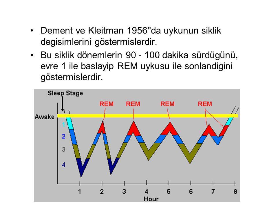 Dement ve Kleitman 1956 da uykunun siklik degisimlerini göstermislerdir.