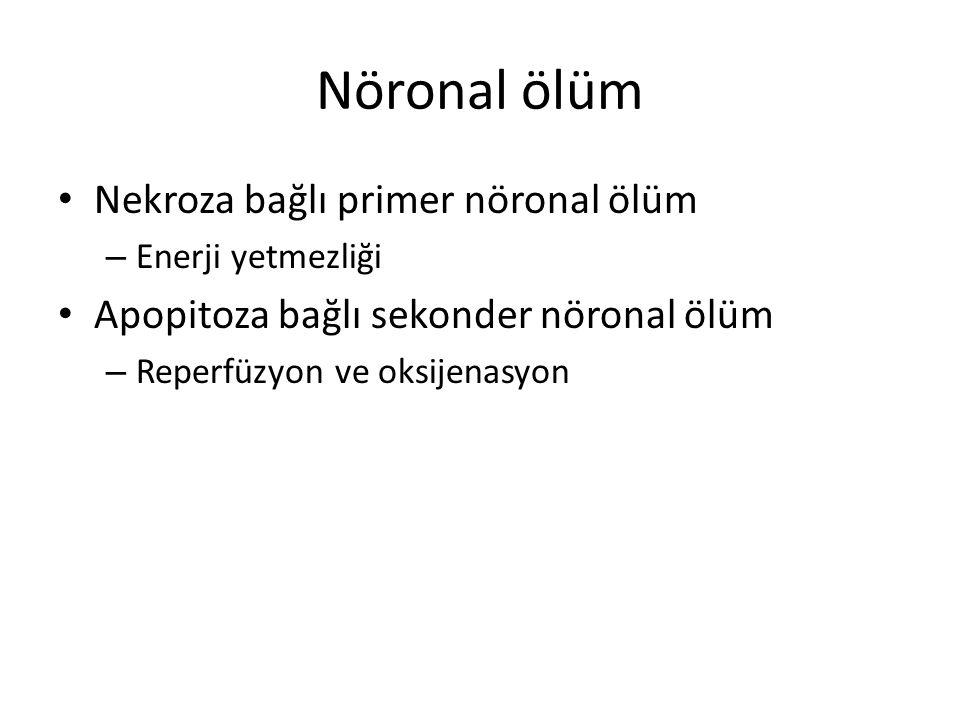 Nöronal ölüm Nekroza bağlı primer nöronal ölüm