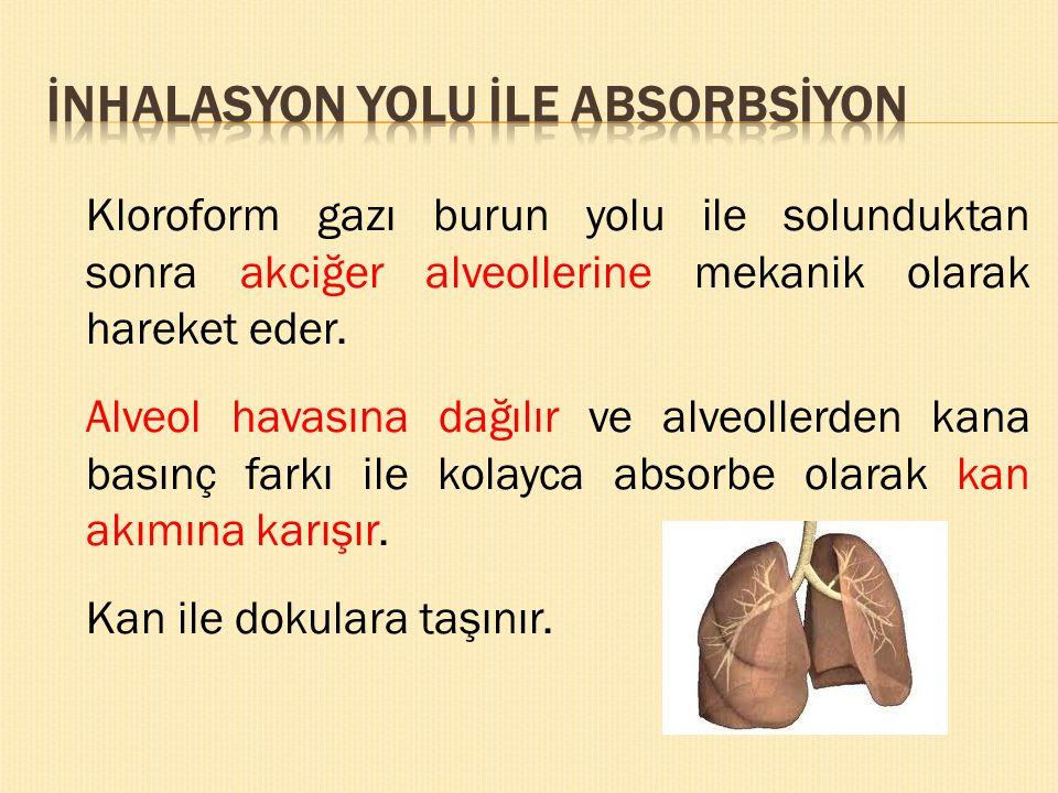 İNHALASYON YOLU İLE ABSORBSİYON