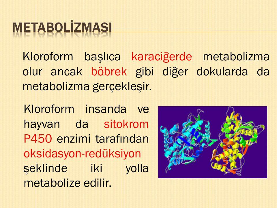 METABOLİZMASI Kloroform başlıca karaciğerde metabolizma olur ancak böbrek gibi diğer dokularda da metabolizma gerçekleşir.