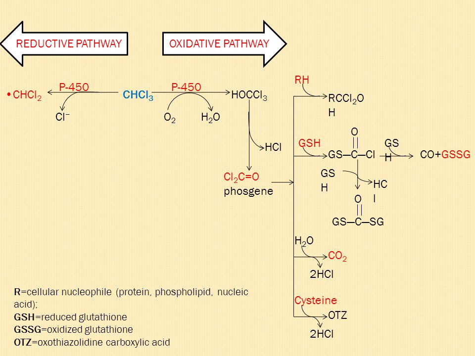 REDUCTIVE PATHWAY OXIDATIVE PATHWAY RH P-450 P-450 •CHCl2 CHCl3 HOCCl3