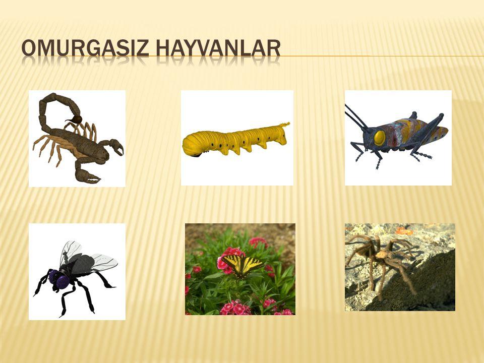 OMURGASIZ HAYVANLAR