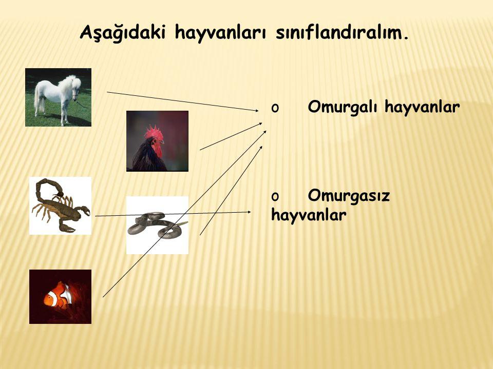 Aşağıdaki hayvanları sınıflandıralım.