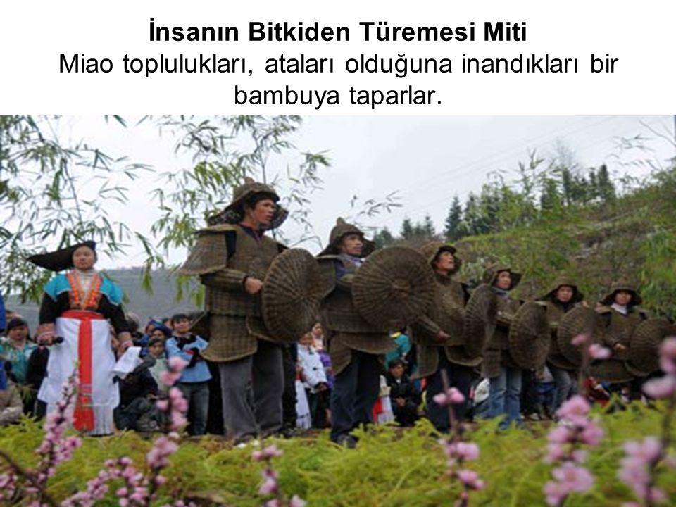 İnsanın Bitkiden Türemesi Miti Miao toplulukları, ataları olduğuna inandıkları bir bambuya taparlar.