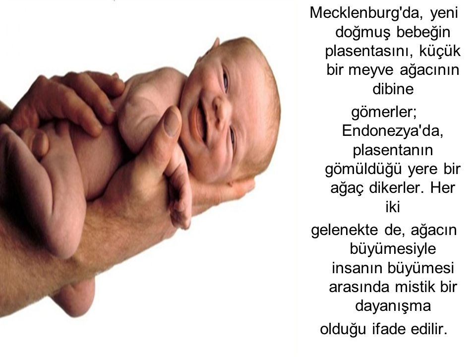 Mecklenburg da, yeni doğmuş bebeğin plasentasını, küçük bir meyve ağacının dibine