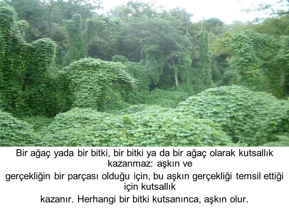 kazanır. Herhangi bir bitki kutsanınca, aşkın olur.