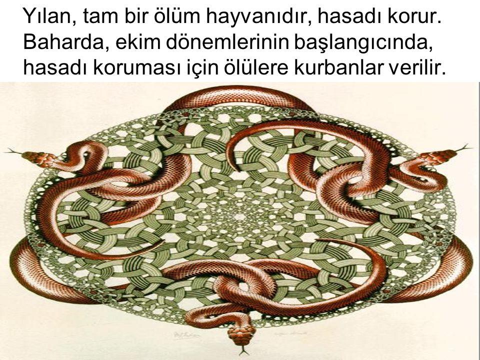 Yılan, tam bir ölüm hayvanıdır, hasadı korur