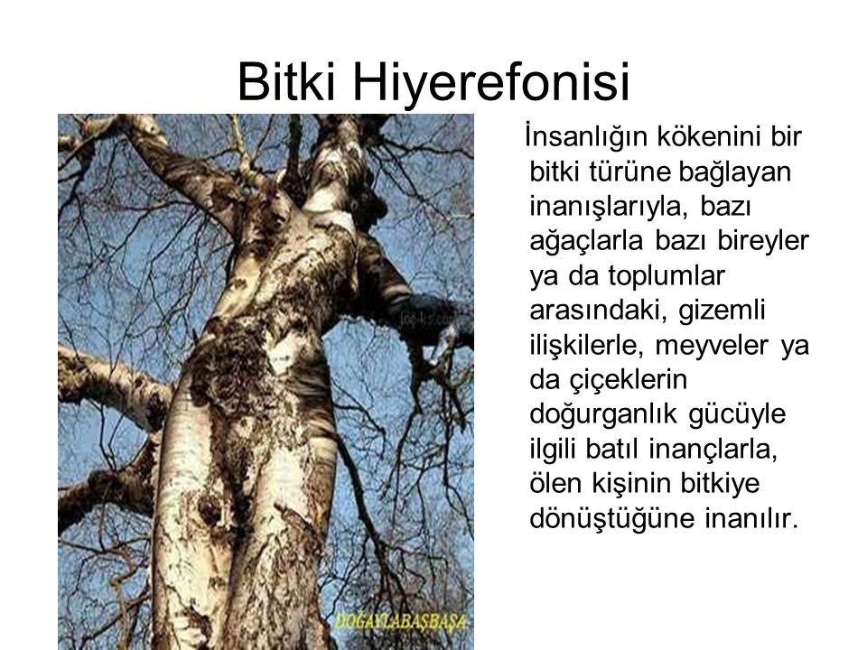 Bitki Hiyerefonisi