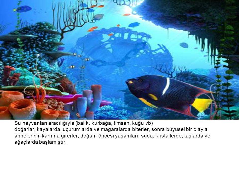 Su hayvanları aracılığıyla (balık, kurbağa, timsah, kuğu vb)