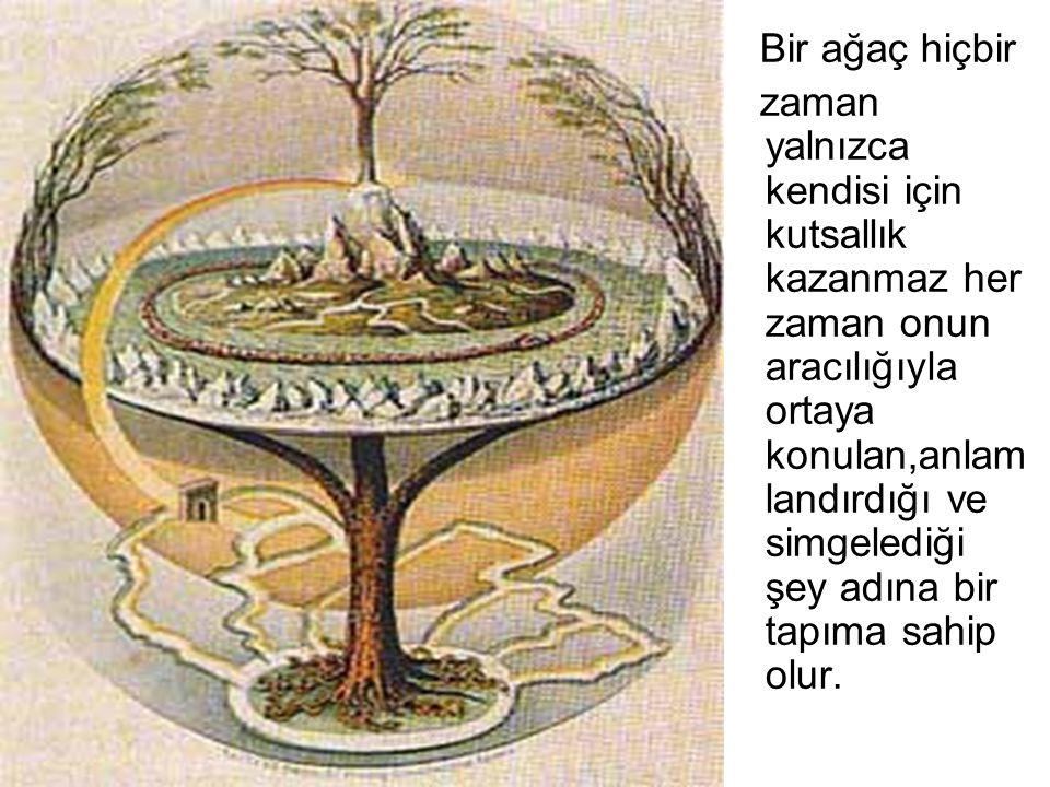 Bir ağaç hiçbir