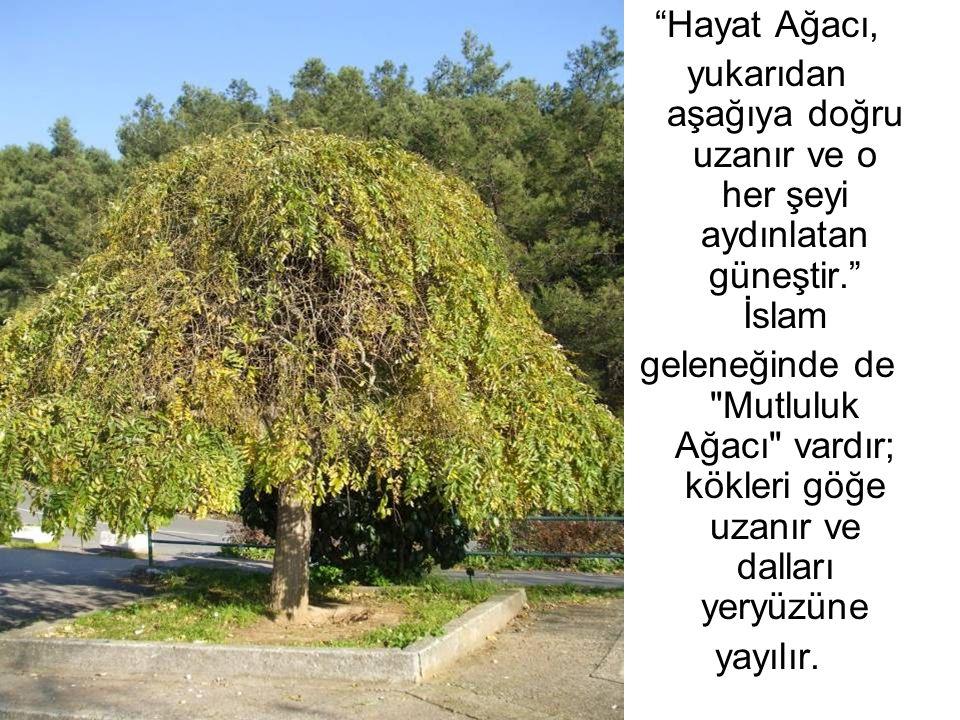 Hayat Ağacı, yukarıdan aşağıya doğru uzanır ve o her şeyi aydınlatan güneştir. İslam.