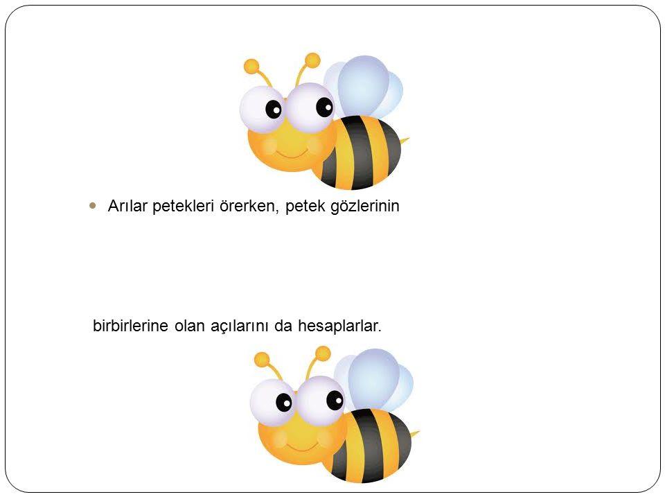 Arılar petekleri örerken, petek gözlerinin