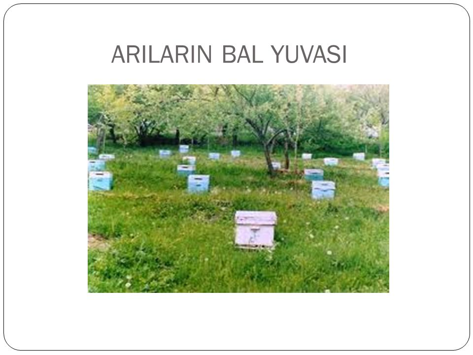 ARILARIN BAL YUVASI