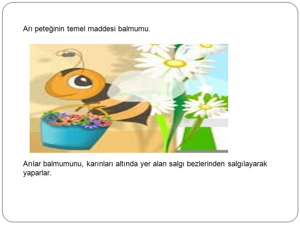 Arı peteğinin temel maddesi balmumu.