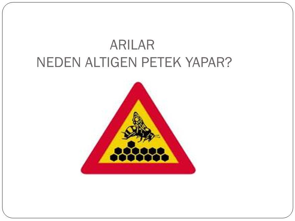 ARILAR NEDEN ALTIGEN PETEK YAPAR