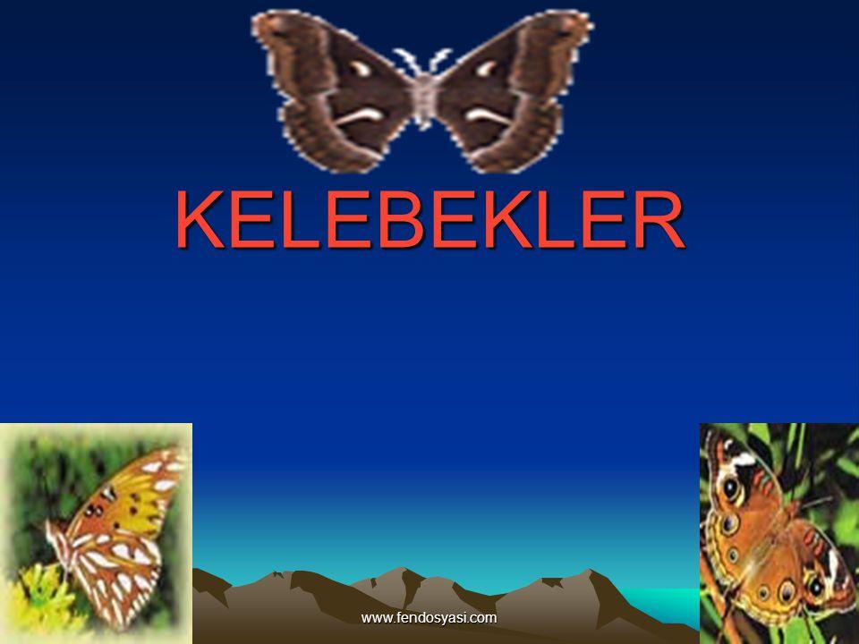 KELEBEKLER www.fendosyasi.com