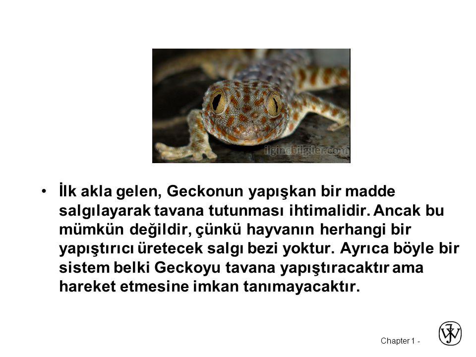 İlk akla gelen, Geckonun yapışkan bir madde salgılayarak tavana tutunması ihtimalidir.